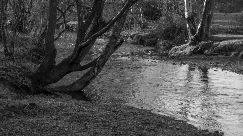 New Forest-3.jpg