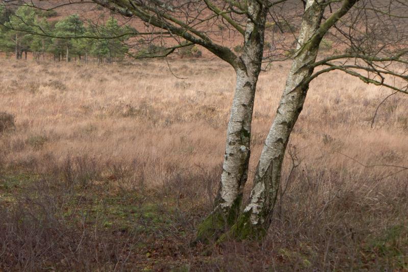 New Forest-4.jpg