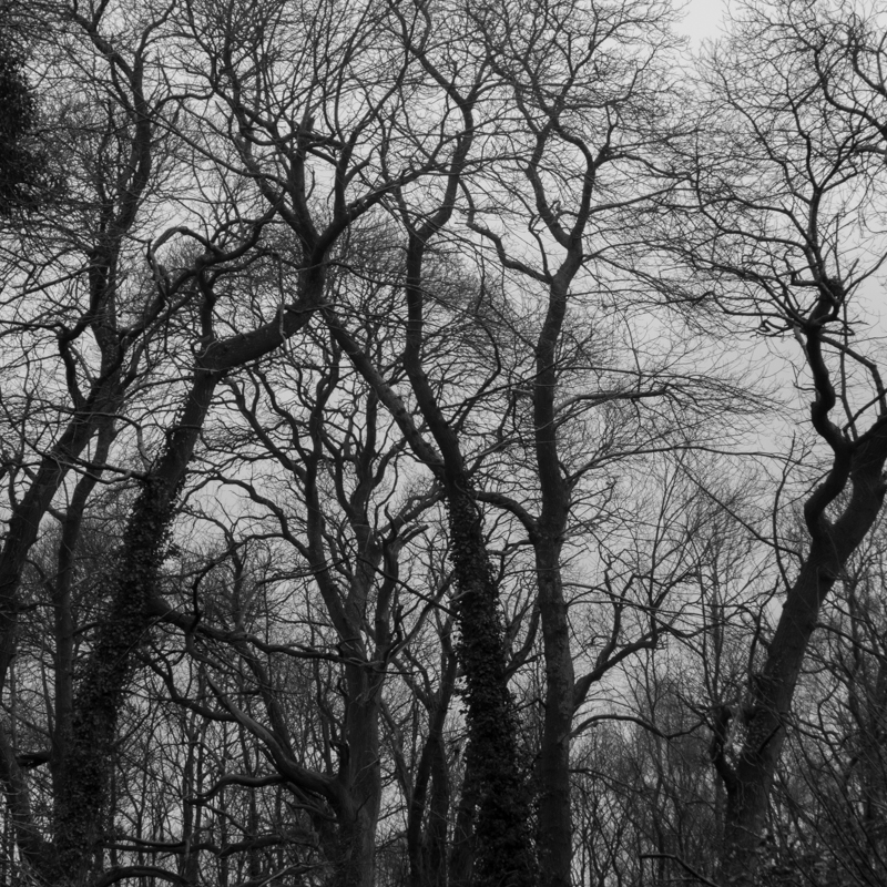 New Forest-5.jpg