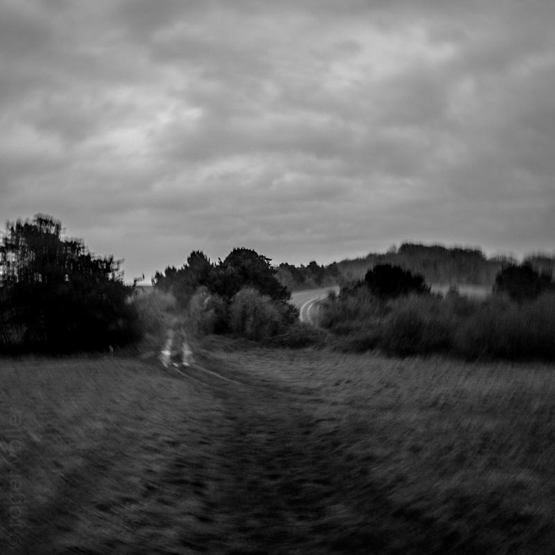 New Forest-7.jpg