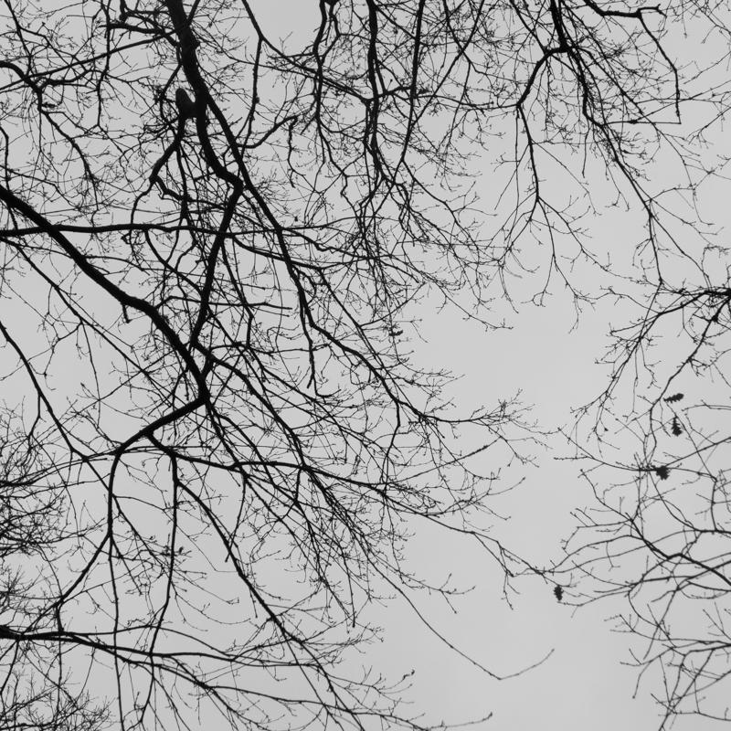 New Forest-6.jpg