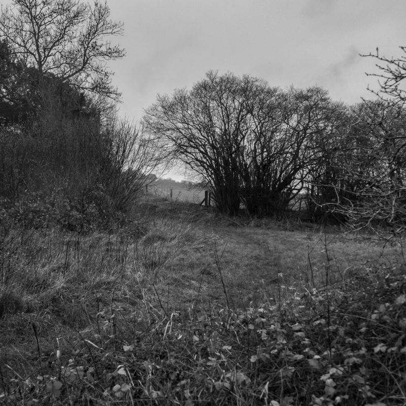 New Forest-8.jpg
