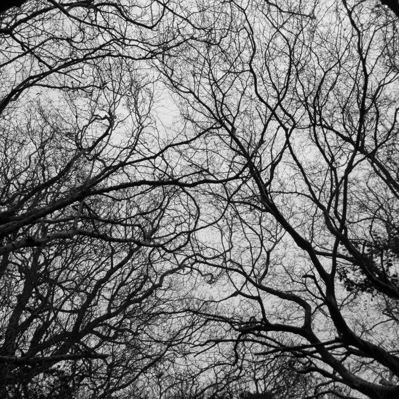New Forest-9.jpg