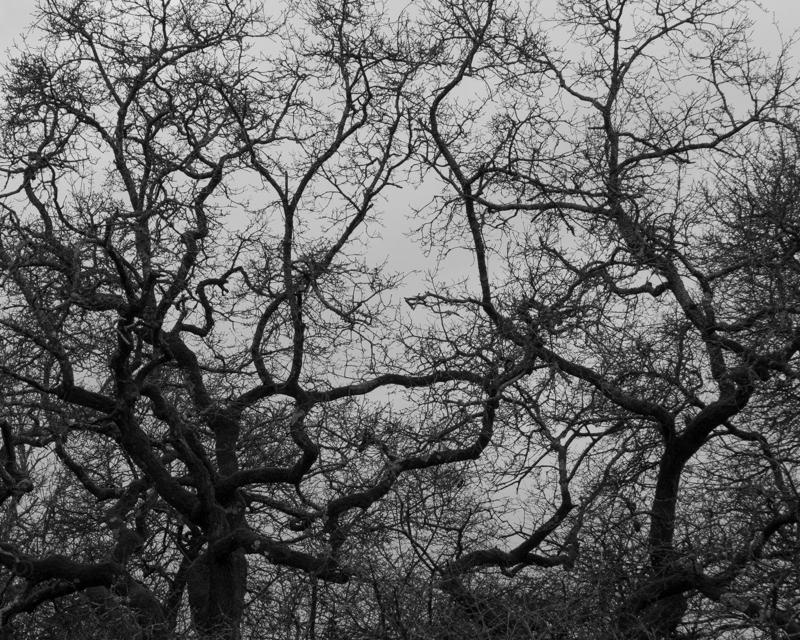 New Forest-11.jpg