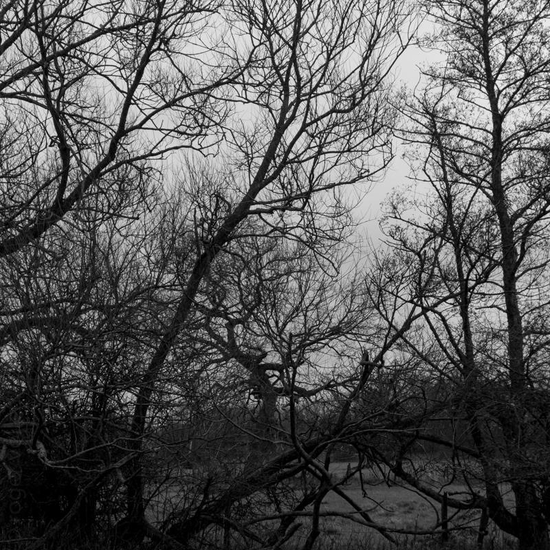 New Forest-12.jpg