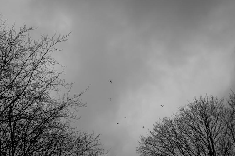 New Forest-14.jpg
