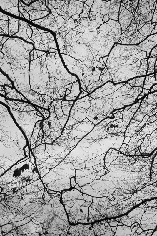 New Forest-16.jpg