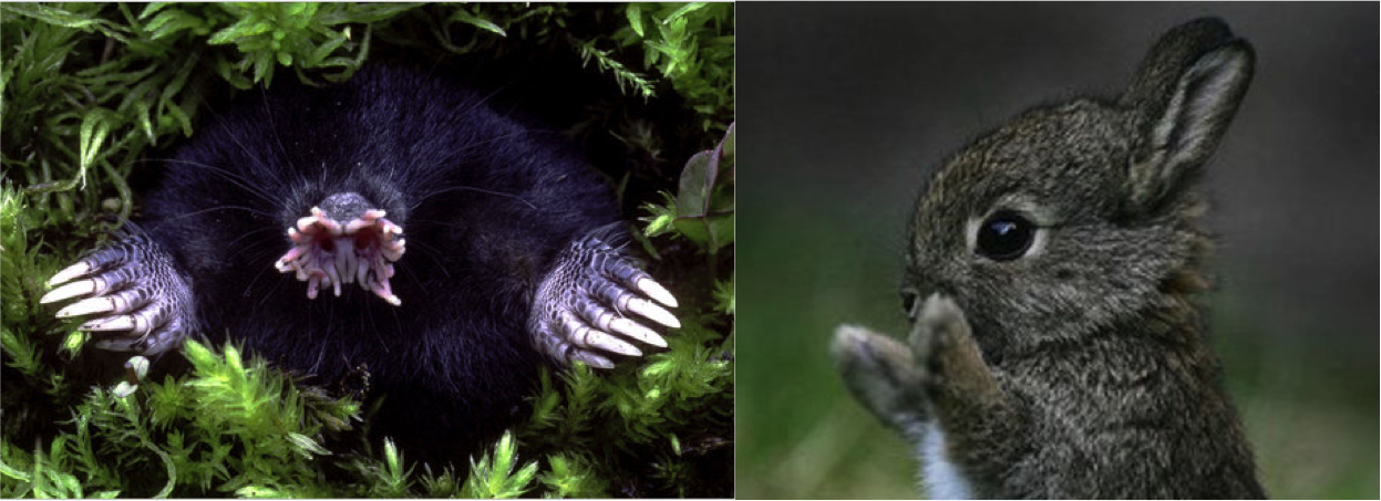 Photo on the left courtesy ofGary Meszaros/Photo Researchers. Source of right photo unknown.