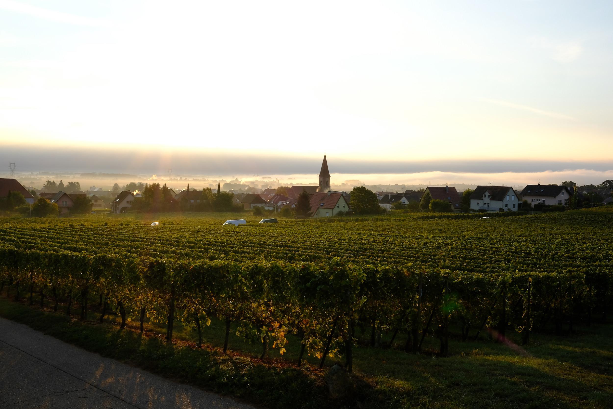 fotoreportage-wijn produceren-Vignoble des 2 lunes-Bosman Wijnkopers-452.jpg