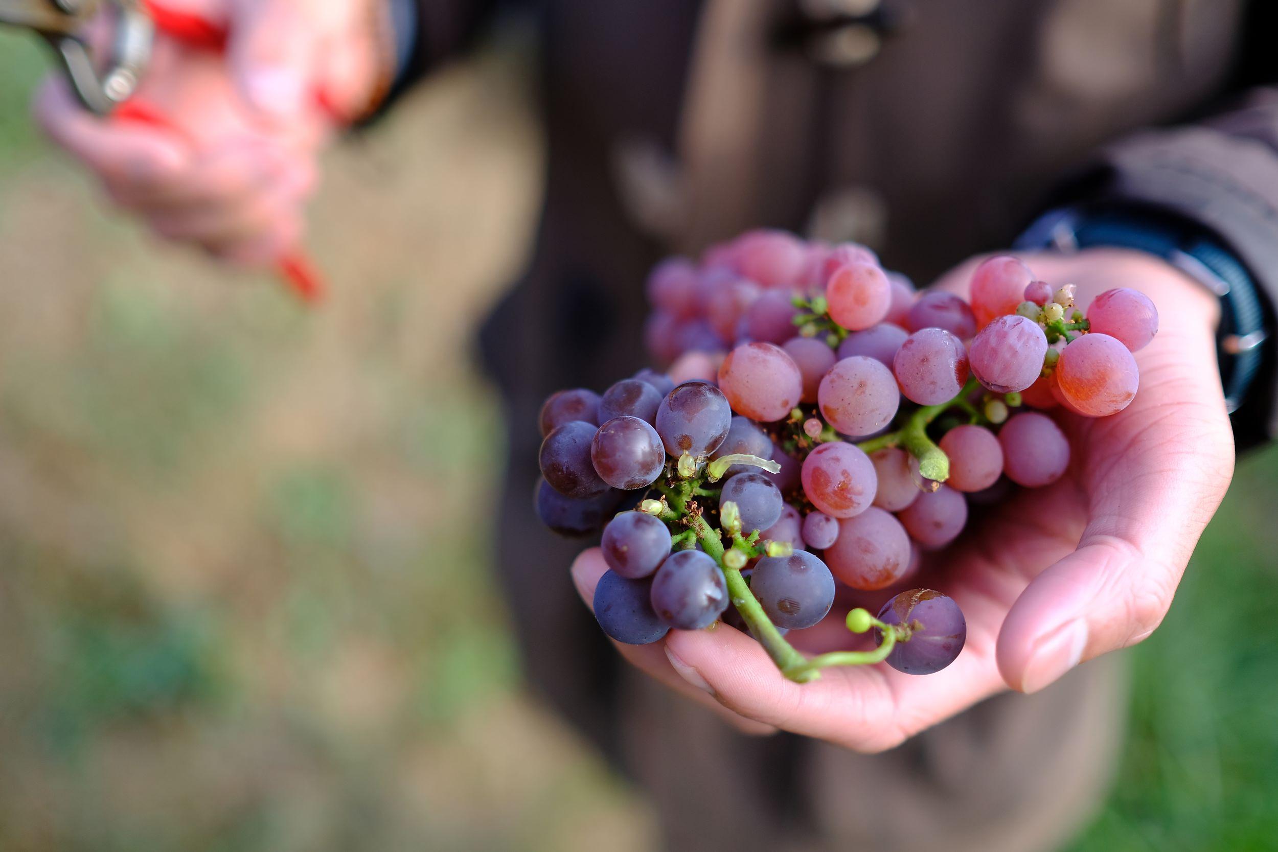 fotoreportage-wijn produceren-Vignoble des 2 lunes-Bosman Wijnkopers-455.jpg