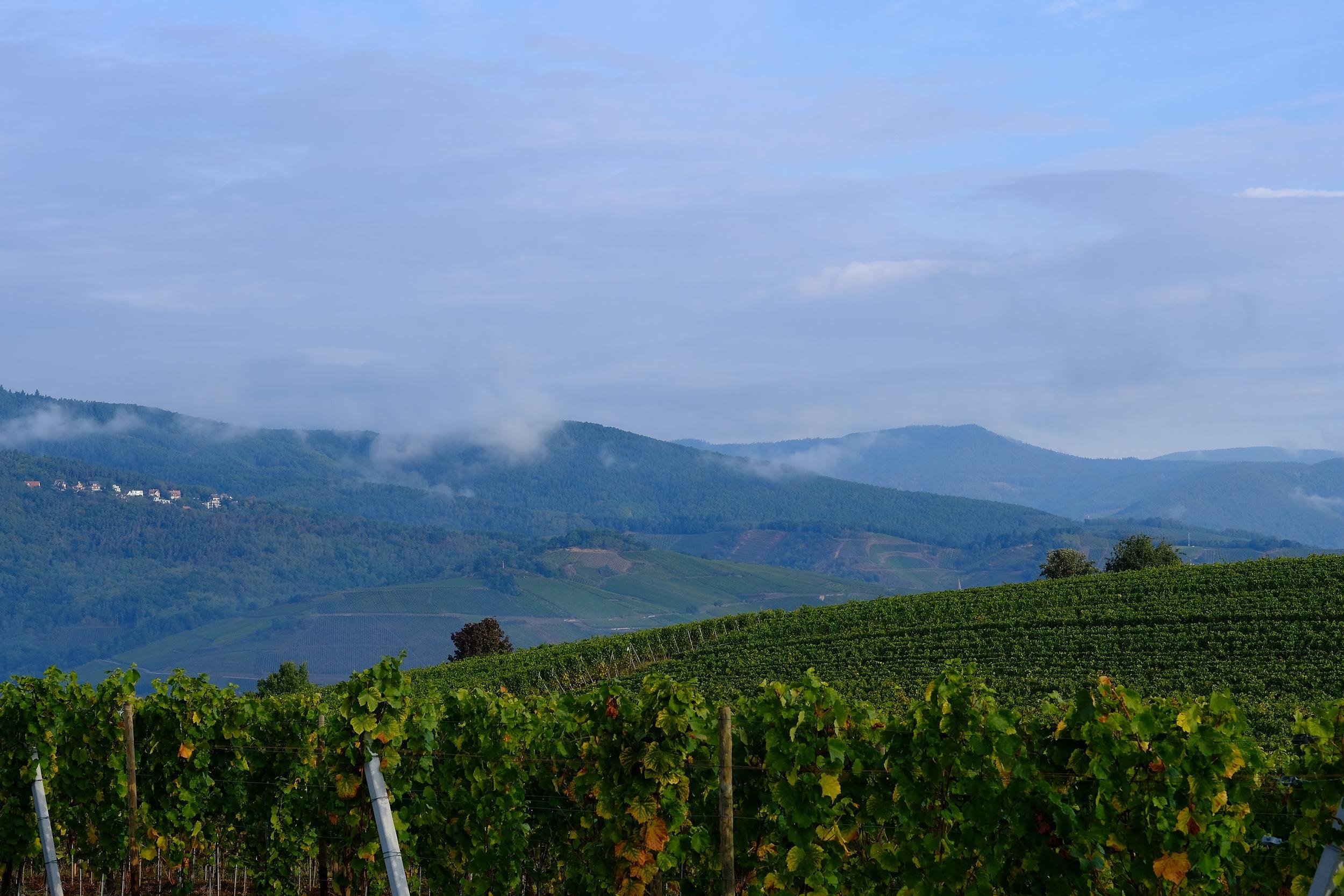 fotoreportage-wijn produceren-Vignoble des 2 lunes-Bosman Wijnkopers-456.jpg