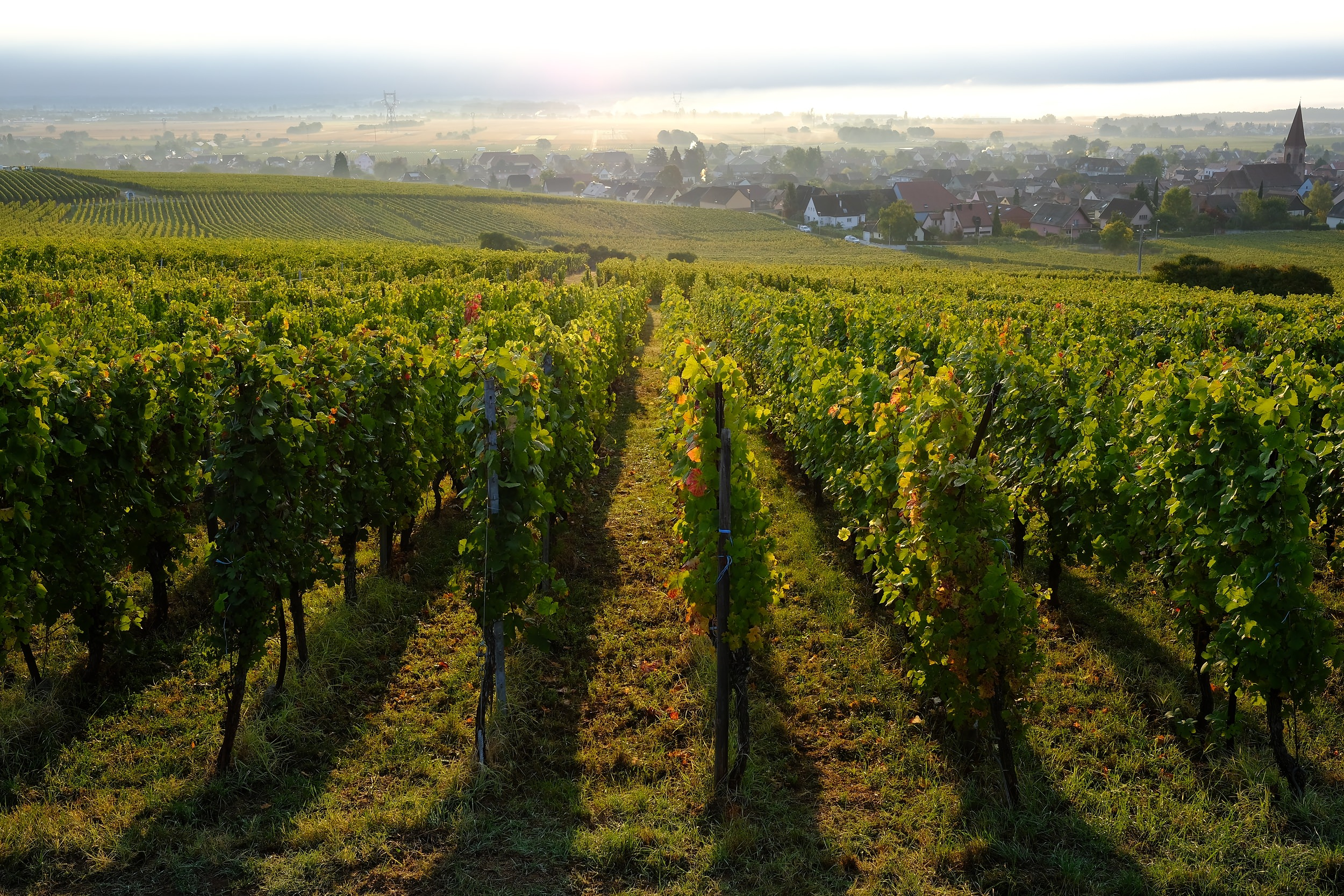 fotoreportage-wijn produceren-Vignoble des 2 lunes-Bosman Wijnkopers-454.jpg