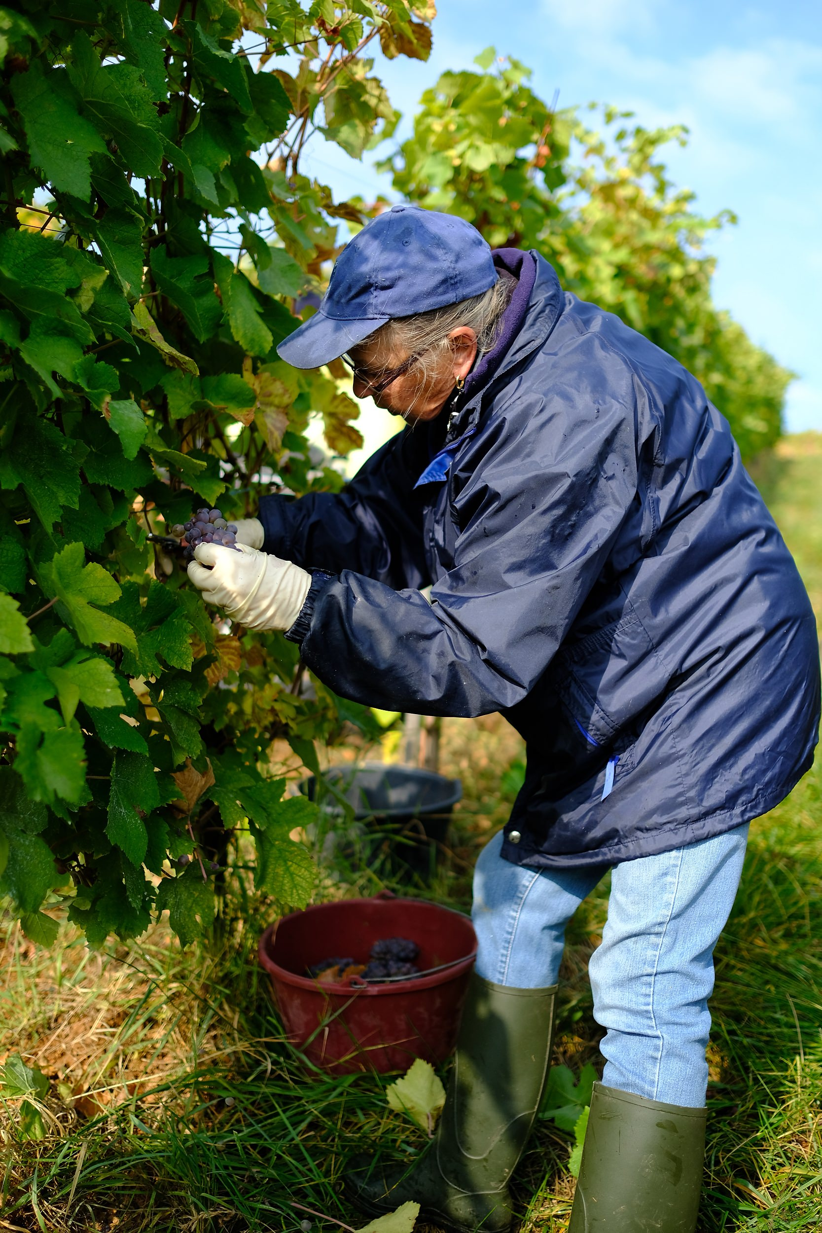 fotoreportage-wijn produceren-Vignoble des 2 lunes-Bosman Wijnkopers-459.jpg