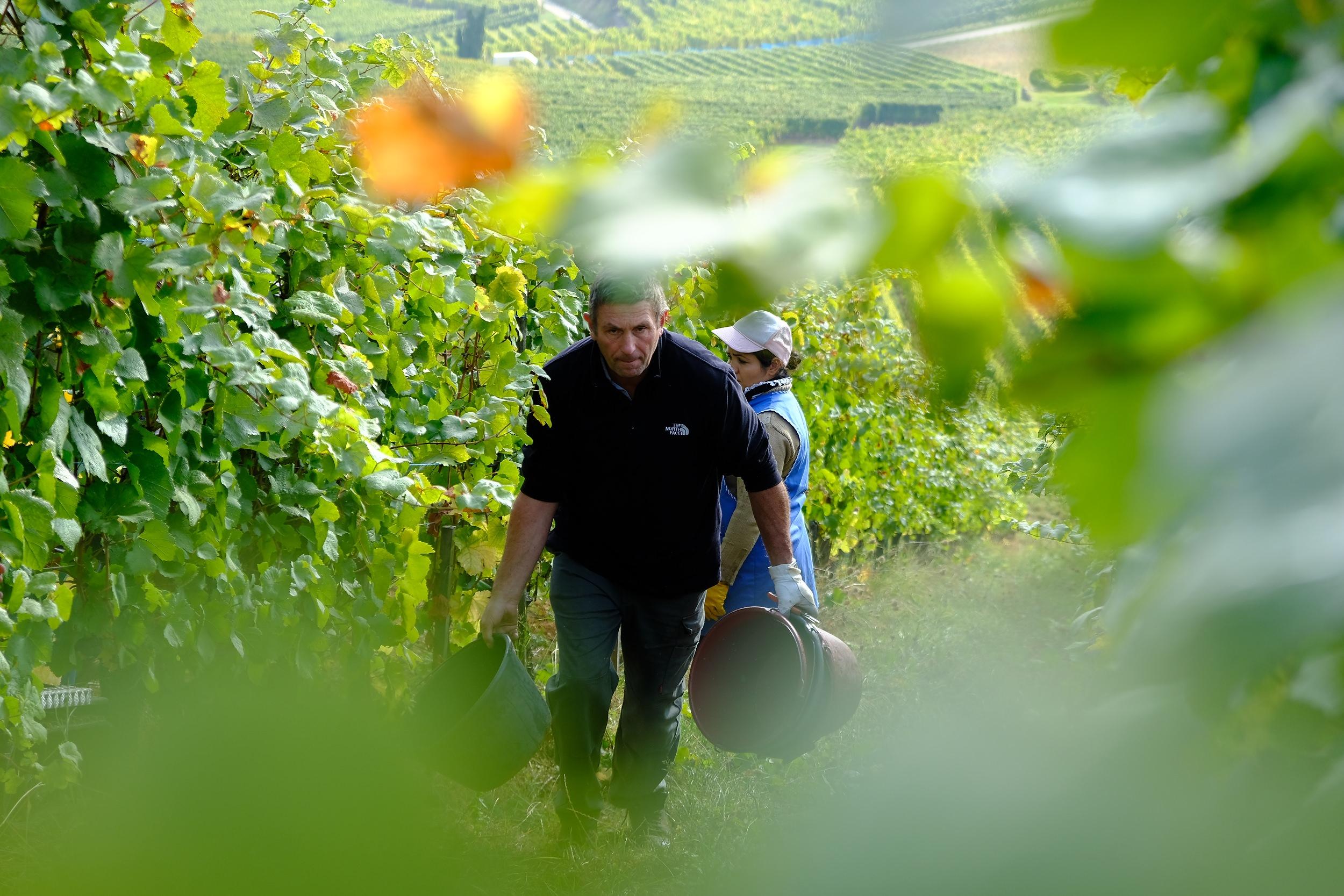 fotoreportage-wijn produceren-Vignoble des 2 lunes-Bosman Wijnkopers-464.jpg