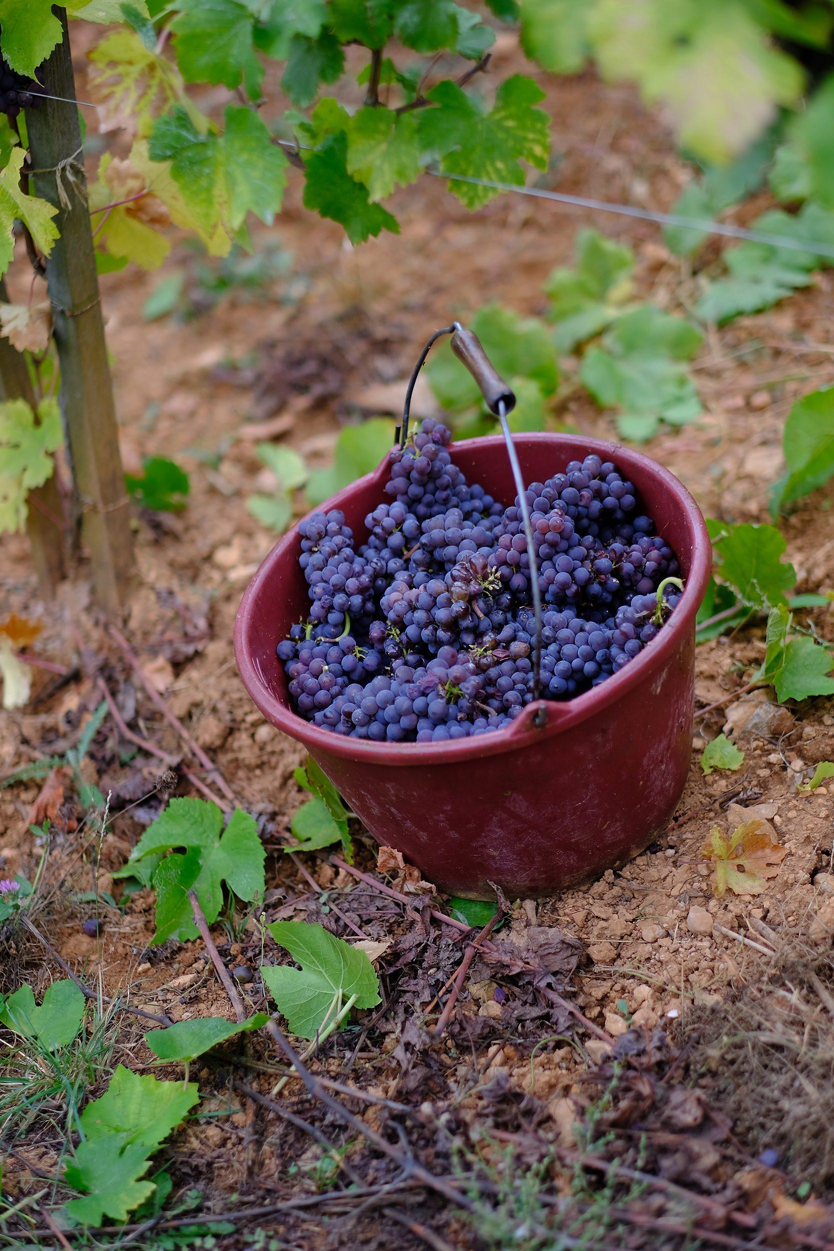 fotoreportage-wijn produceren-Vignoble des 2 lunes-Bosman Wijnkopers-469.jpg