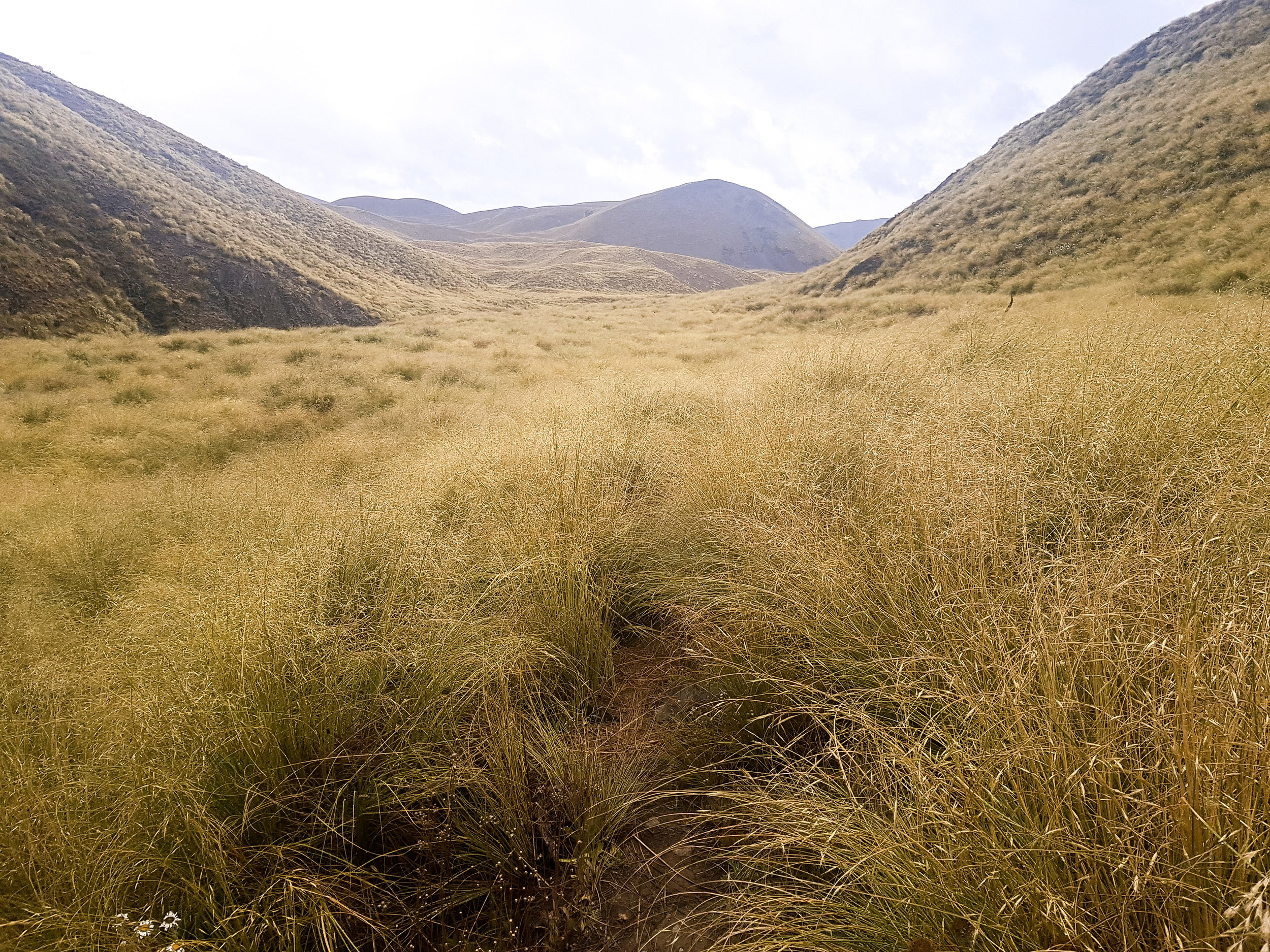 This is what tussock hell looks like. Don't see a trail? Neither do we.  photo/ Jonathan