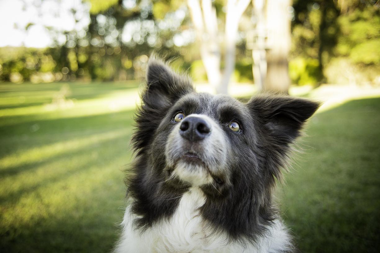 Dog_portrait_172A7849.jpg