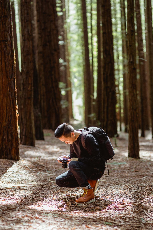 redwoods-5584.jpg