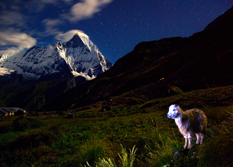 goat-at-night-nocturna-cabrita-4.jpg