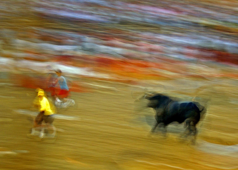 bulls-toros.jpg
