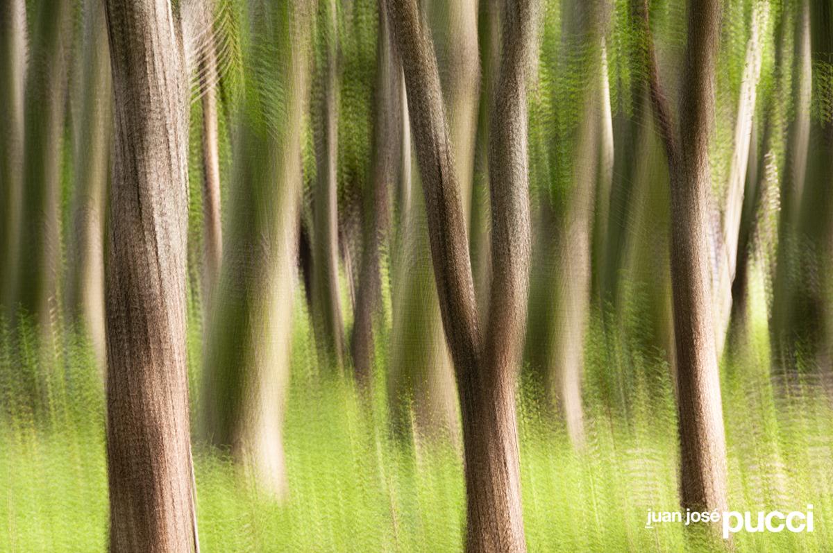 bosque Pinilla-sueños 9.jpg