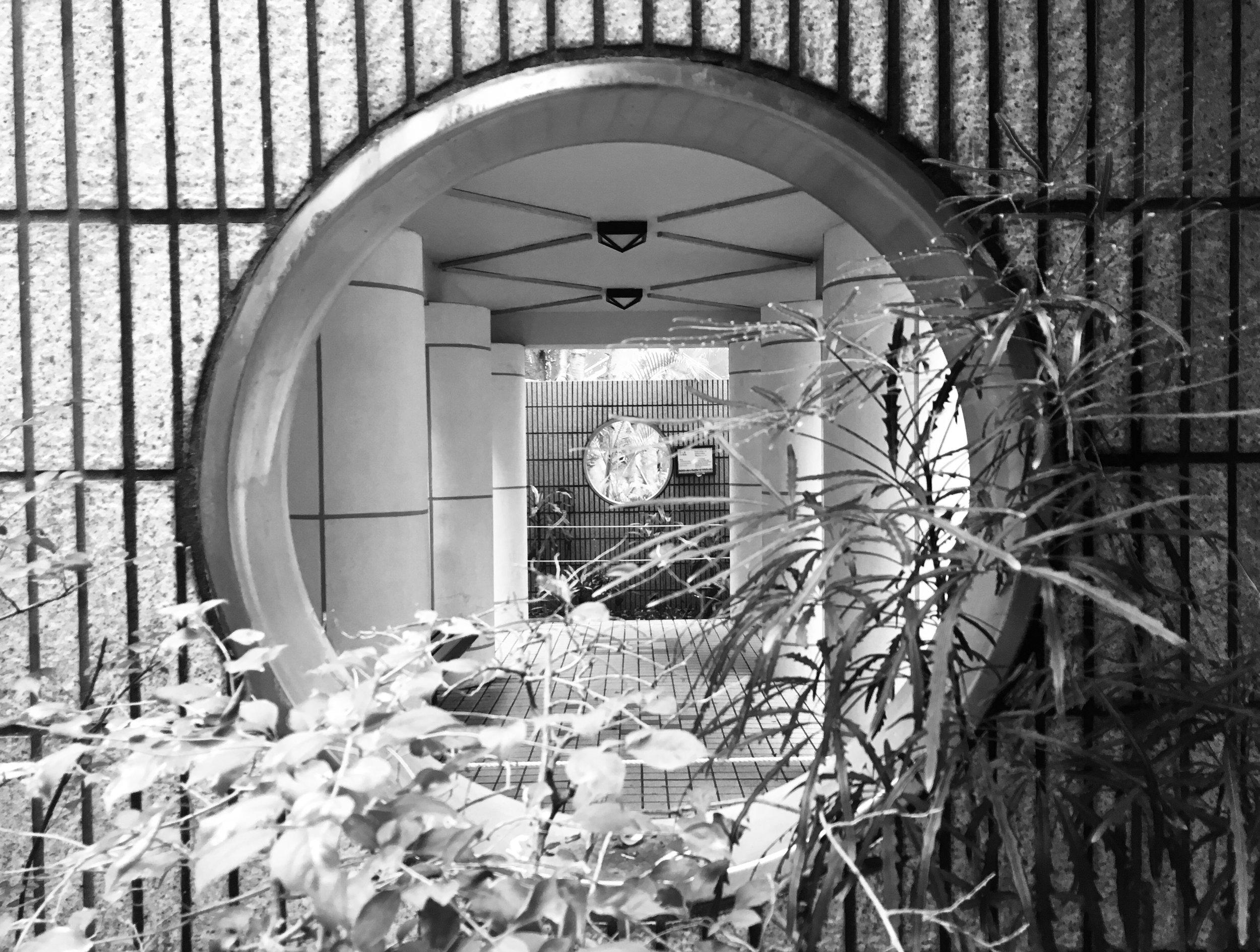 Through the window © Naida Ginnane 2018, iPhone 6, Camera on 'Mono' setting.