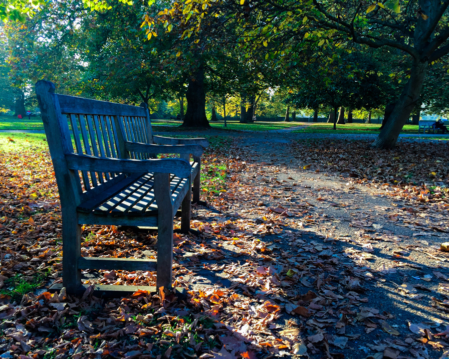 'Hyde Park Chair' © Sean Ginnane 2017, Fujifilm X-T1  This is a gorgeous example of great lighting and composition working together to create beauty from a mundane subject.