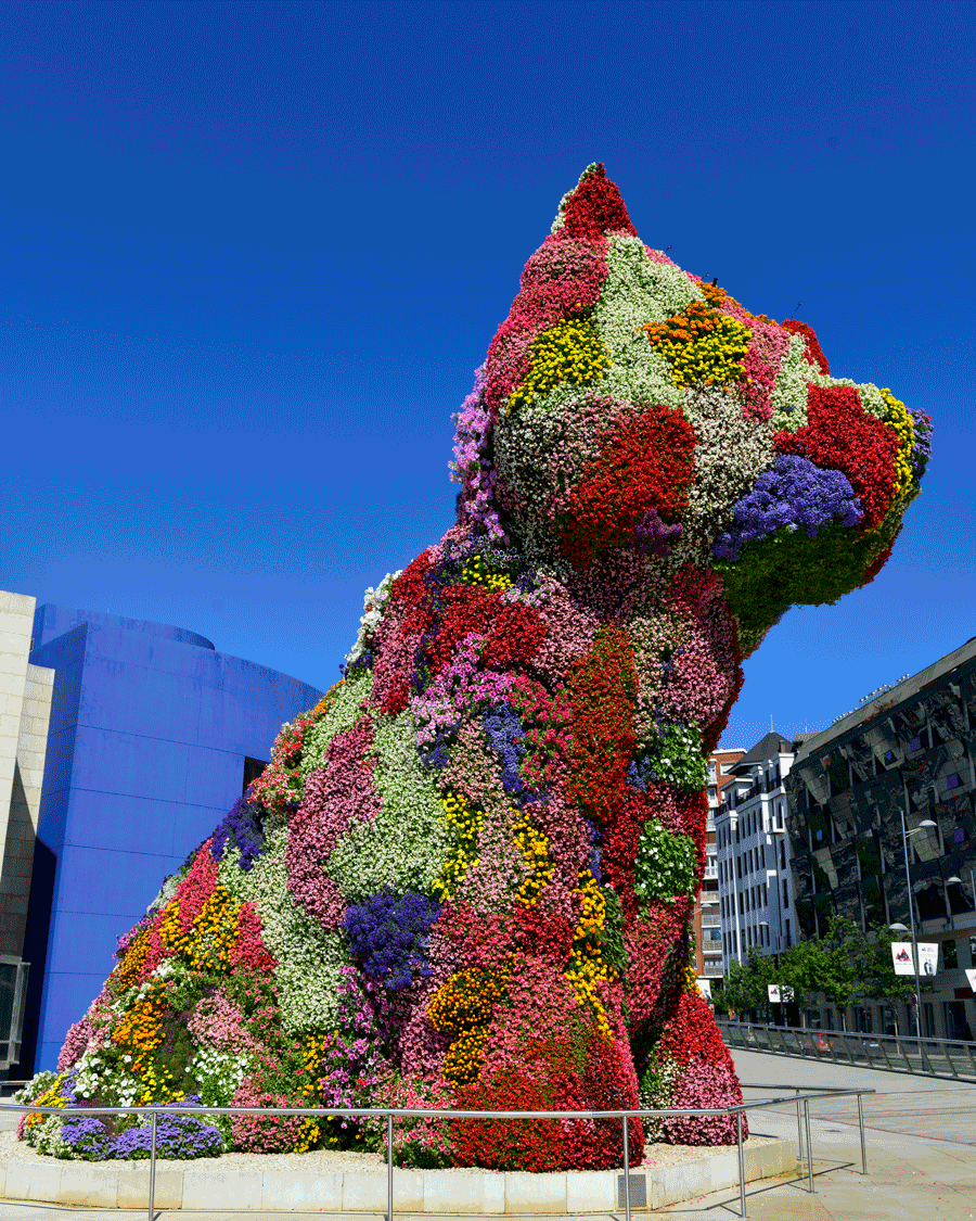 'Koons' Puppy' © 2016 Naida Ginnane Nikon D800 24-70mm lens f/ 9, 1/250, ISO 100. Some sculptures are not made to last. Puppy is made from an elaborate network of wire frames, watering pipes and vast numbers of flowering pot plants. It's purpose is to delight and amuse with it's huge scale and incongruous choice of materials.