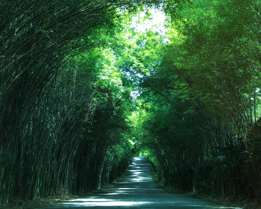 WEEK 16: Green. 'Green Tunnel' © Naida Ginnane 2018 iPhone 6s. Three of the weeks featured specific colours as the subject. Not always easy to shoot, depending upon the colour, but living in Asia, 'green' was not too tough.