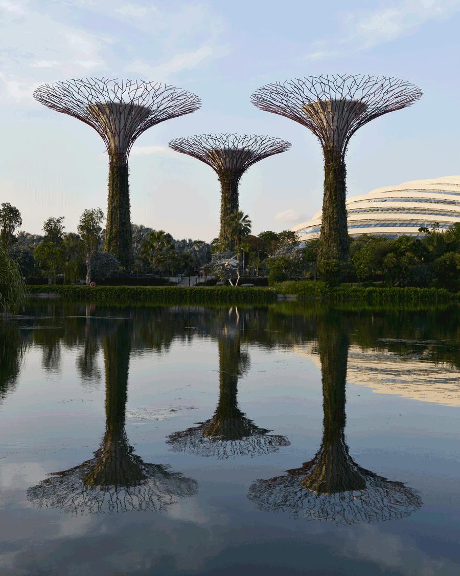 'Super Trees' © Naida Ginnane 2017 Nikon D800 24-70mm lens,1/ 200, f/6, ISO 100. A great example of a linear arrangement.