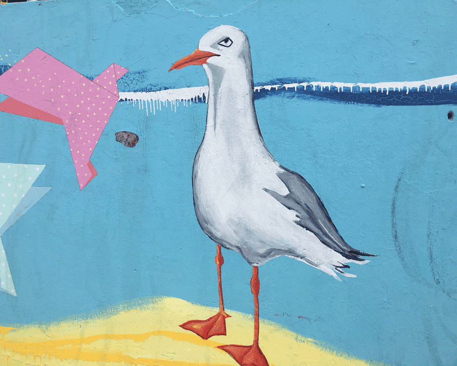 'Sarcastic Seagull' © Naida Ginnane 2018 iPhone X, f/2.2, 1/1250 ISO 25
