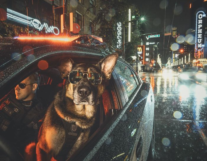 vancouver-police-department-charity-dog-calendar-2019-2-5bd16d9fd1323__700.jpg