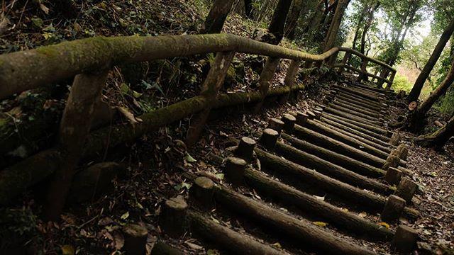 #hakone #japan #onsentown #travelphotography #stairwaytoheaven #lostintranslation #destinationtravel #explorejapan #fujifilm #x100f #fujifilmx100f #classicchrome #instatravel #japanese #travelgram #toseetheworld #photooftheday#mountfuji #travel #photojournal #lakeashi #wanderlust #waltermitty #suntorytime #neverstopexploring  #life #mountainside #fujiframez #journey