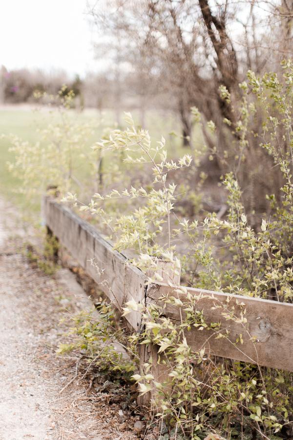dayton, columbus, cincinnati ohio wedding and portrait photography_dayton lifestyle film, film photographers in dayton ohio_ columbus ohio wedding photography_alli maternity session