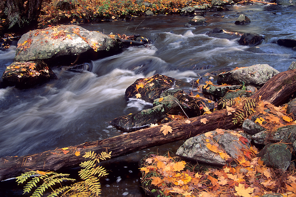 New England Fall Foliage Tour
