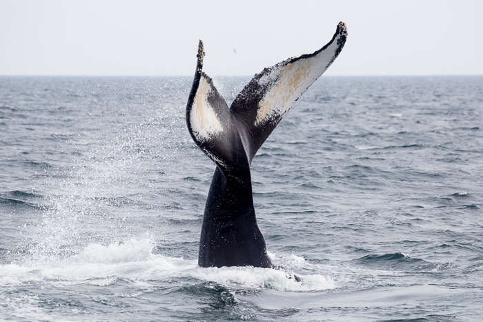 New England Whale Watch Photo Tour