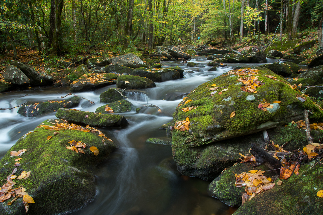 Great_Smoky_Moutiains_Photo_Tour_Workshop-8339.JPG