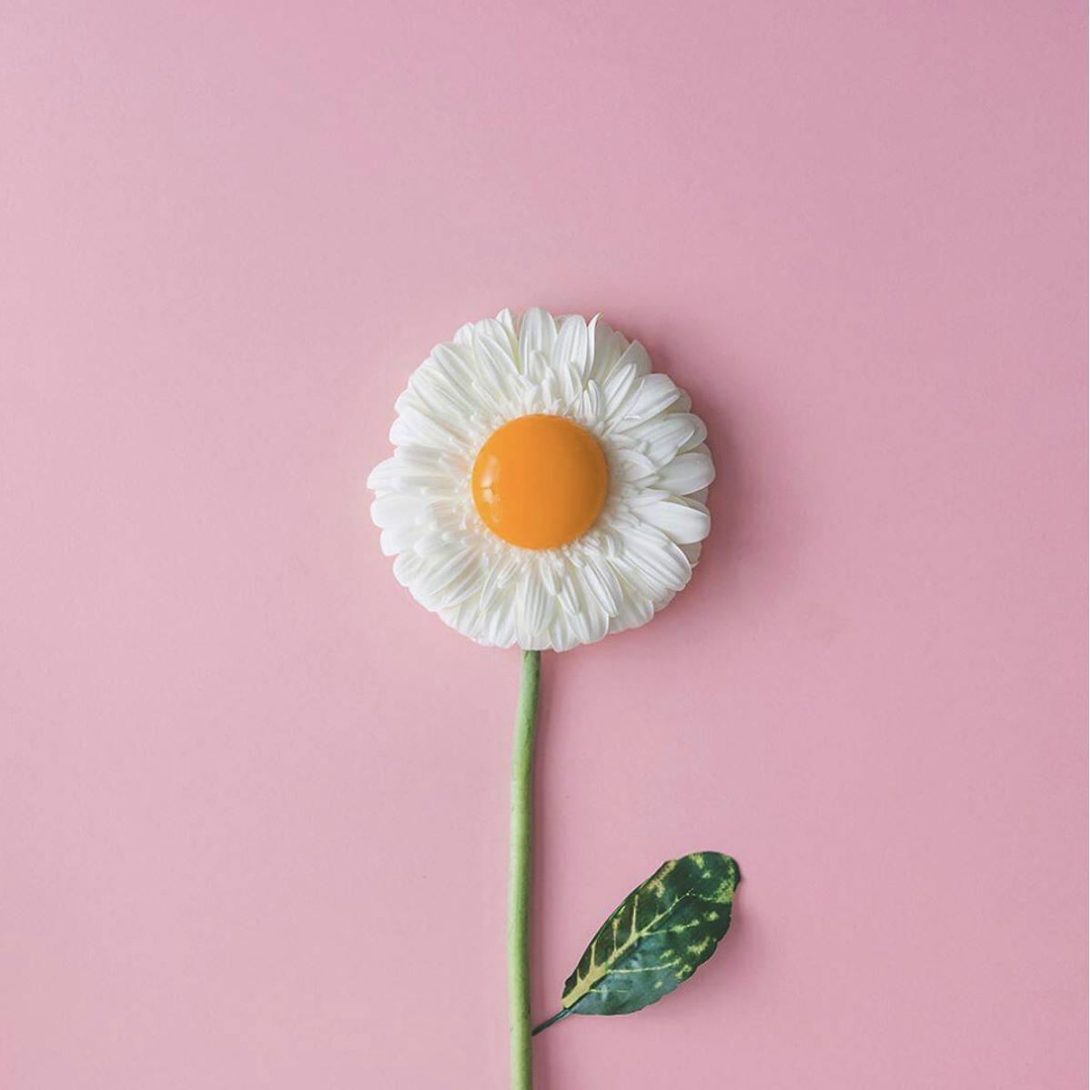 egg_daisy_flower.png