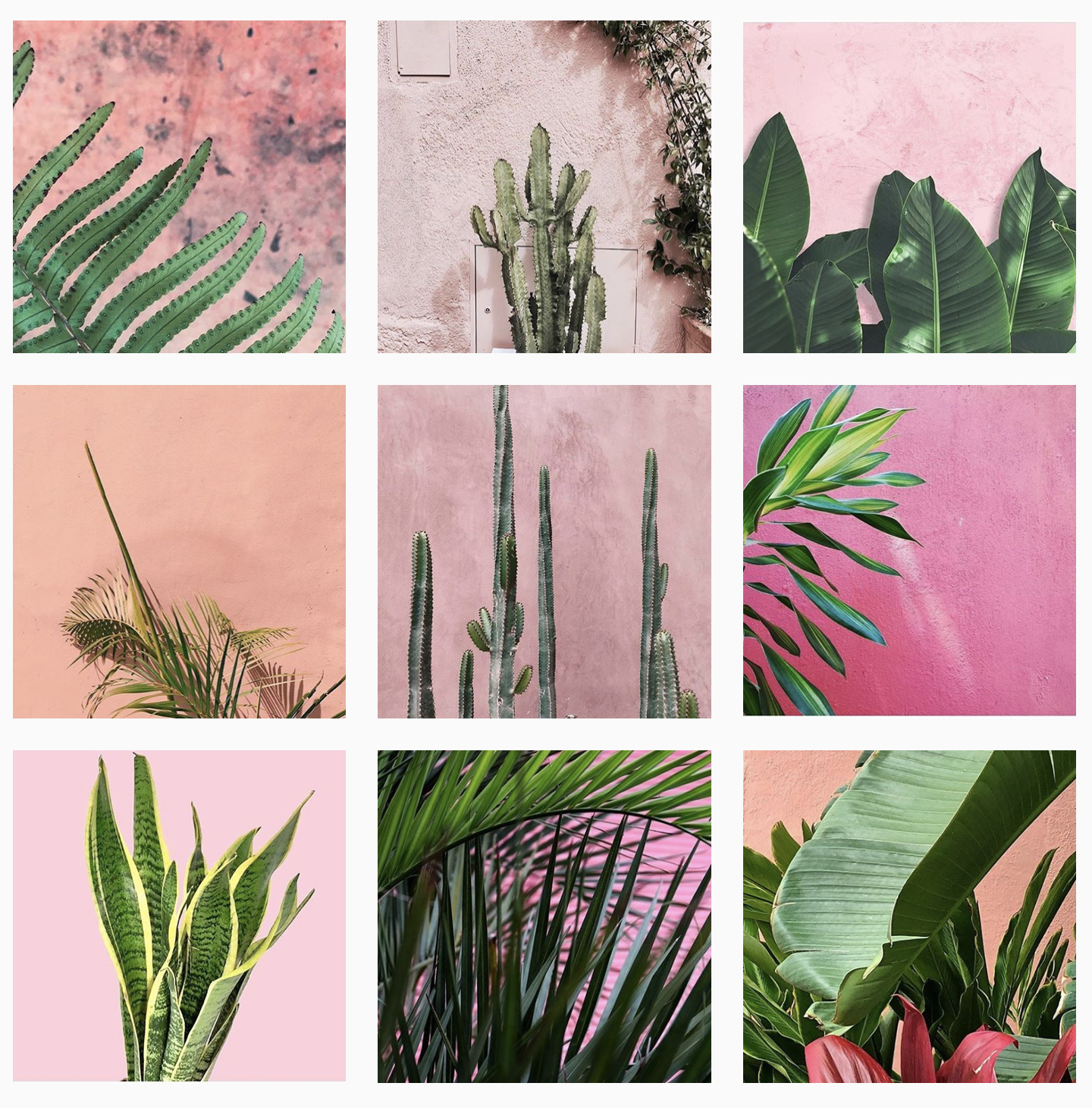 Plants On Pink.png