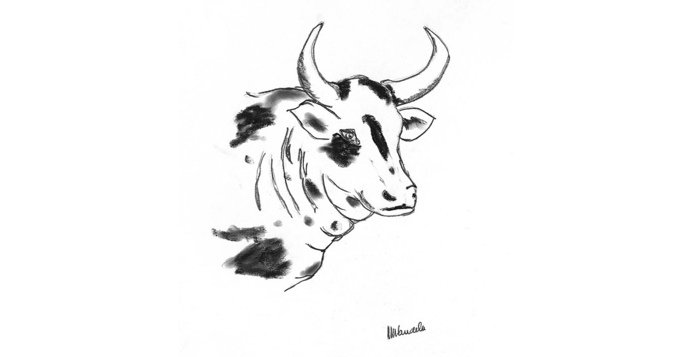 bull drawing nelson mandela.jpg