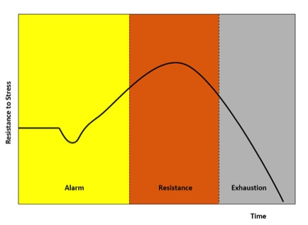 A diagram of the General Adaptation Syndrome model