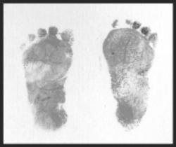 Sierra's feet