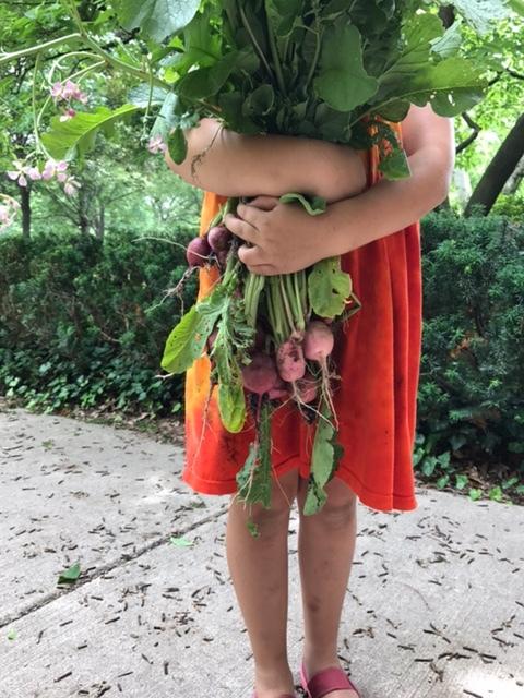 Harvesting vegetables at DWS summer camp