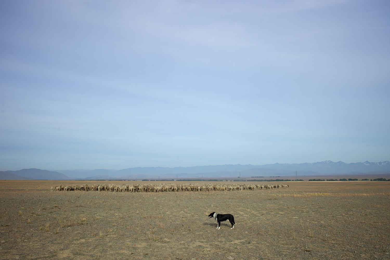 NZ_Sheep_Culture_ 001.jpg