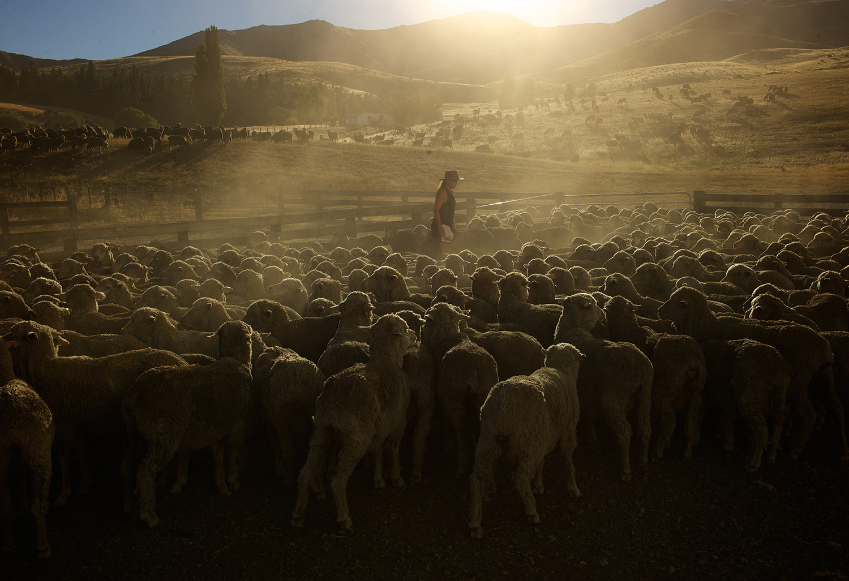 NZ_Sheep_Culture_ 011.jpg