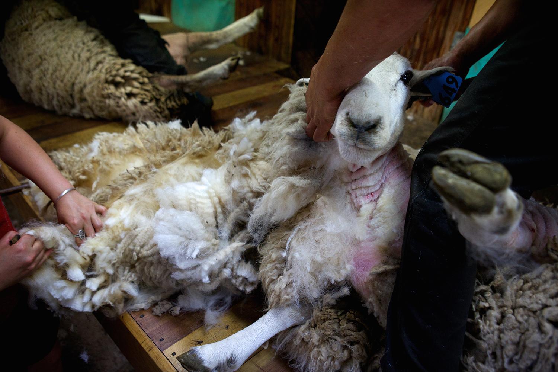NZ_Sheep_Culture_ 013.jpg