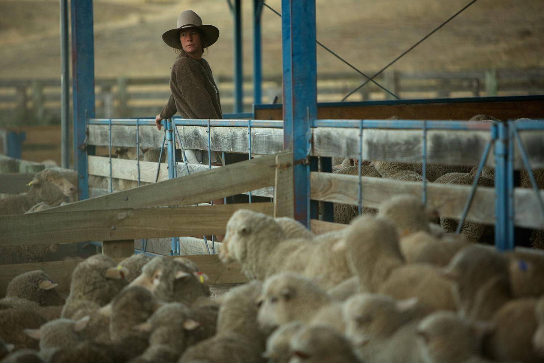NZ_Sheep_Culture_ 017.jpg