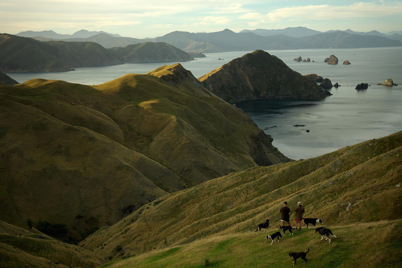 NZ_Sheep_Culture_ 018.jpg