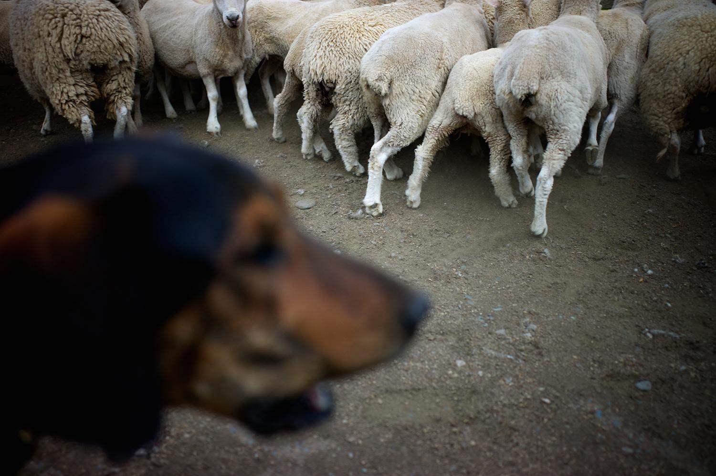NZ_Sheep_Culture_ 019.jpg
