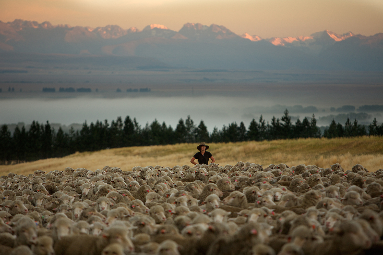 NZ_Sheep_Culture_ 024.jpg